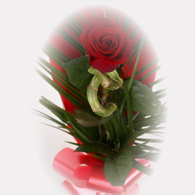 additional image for Single Red Rose & Lucky Bamboo