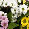 additional image for Beautiful Daisy Bouquet
