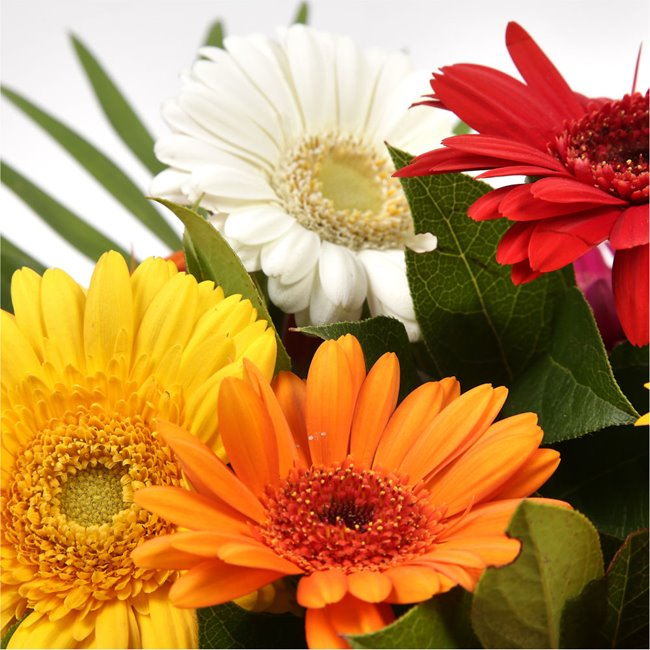 additional image for Gerbera Special Bouquet