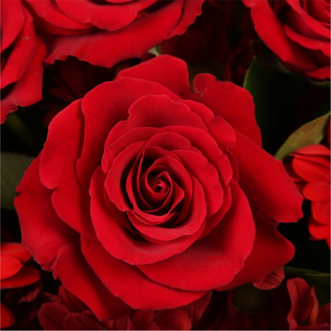 additional image for Luxury Red Bouquet