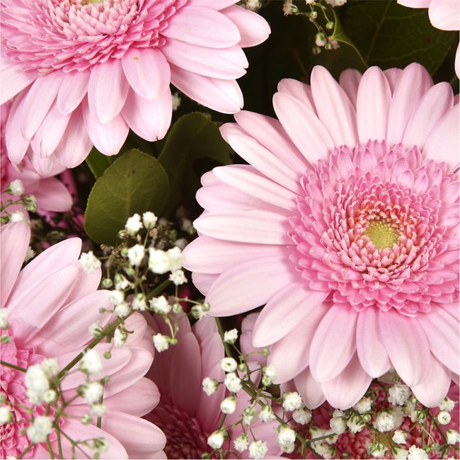 additional image for Pink Glamour Gerberas