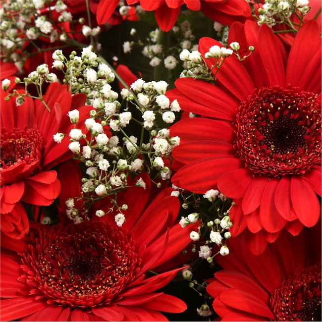 additional image for Red Glamour Gerberas