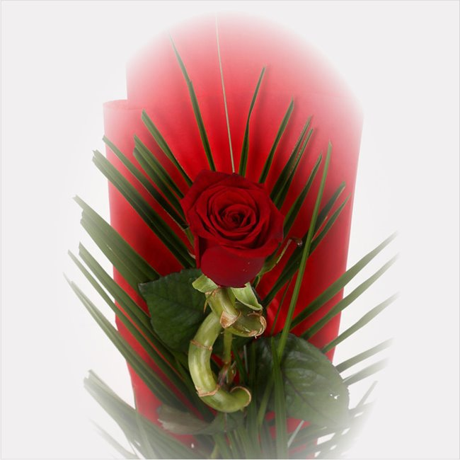 additional image for Single Kiss Red Rose & Lucky Bamboo